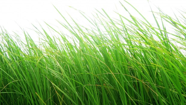 FreeGreatPicture.com-15933-grass-material